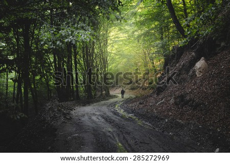man walking on forest road at sunset - stock photo