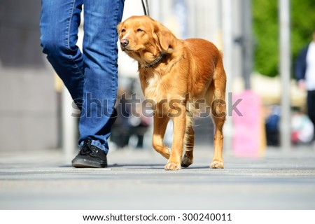 Man walking the dog in the city - stock photo