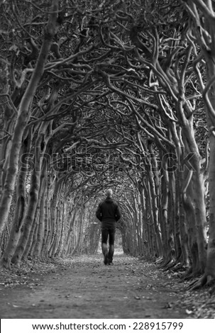 Man walking through a tunnel of trees on an autumn day. Shallow focus. - stock photo