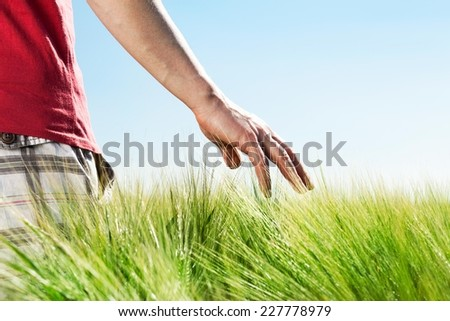 Man walking through the wheat field on a sunny day. - stock photo