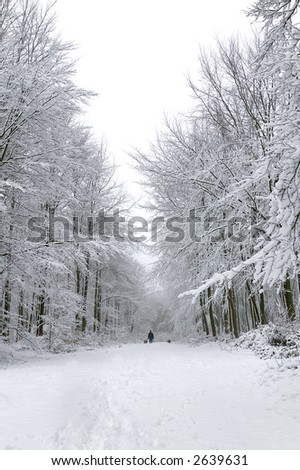Man walking two dogs in a snow covered forest - stock photo