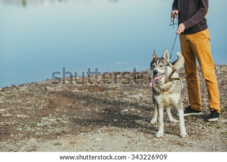 Man walking with a hunting dog - the West Siberian husky. Close-up. Those men are not seen. Autumn. Copy space. - stock photo