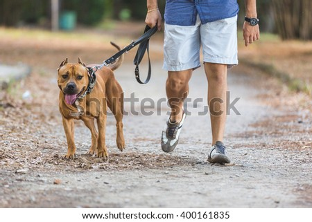 Man walking with his dog at park. Close up view on dog and on the legs of the man holding it on leash. - stock photo