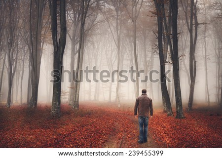 Man walks the trail of a magic foggy forest during autumn - stock photo