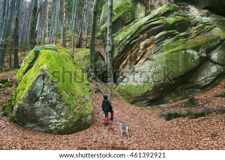 Man walks with his dog. Spring landscape in the beech forest. Beautiful rocks covered with moss. Beauty in nature. Carpathians, Ukraine, Europe