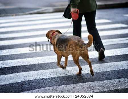 Man with a dog crossing the street - stock photo