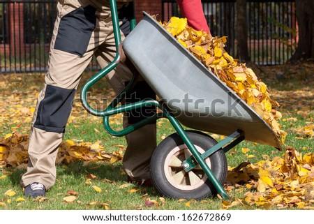 Man with a wheelbarrow during autumn cleannig in the garden - stock photo
