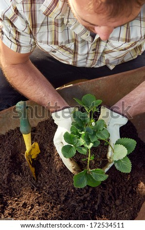 Man with green thumb transplanting potting new plants for the beginning of the growing season - stock photo