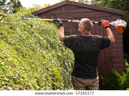 Man with heavy hedge cutter, cutting the top of a hawthorn hedge