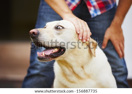 Man with his yellow labrador retriever - stock photo