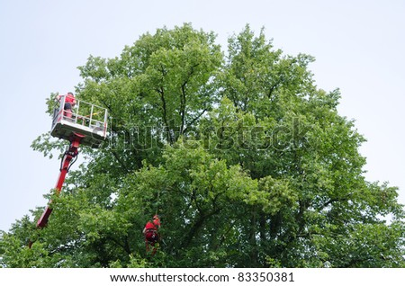 Man working in an elevating platform truck beside a tree - stock photo
