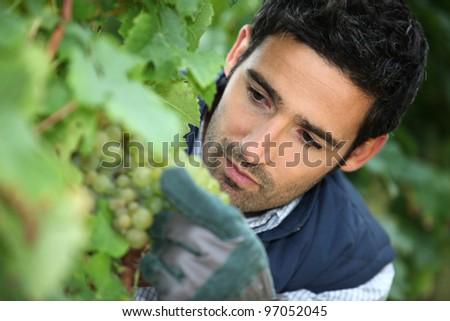 man working in his vineyard - stock photo