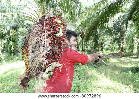 Man working in the palm oil gardent . - stock photo