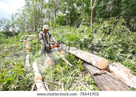 man working to cut and move rubber tree after cut down.In Thailand rubber tree will cut down after 30 years grow.