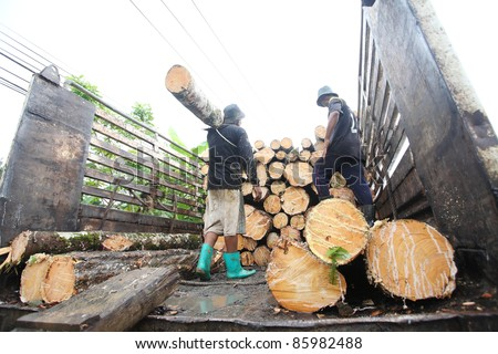 man working to cut and move rubber tree after cut down.In Thailand rubber tree will cut down after 30 years grow. - stock photo