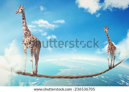 Managing risk big business challenges uncertainty concept. Two giraffes walking on dangerous rope high in sky as symbol of balance overcoming fear for goal success. Young entrepreneur corporate world  - stock photo