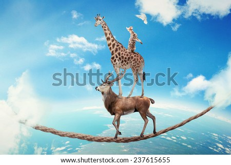 Managing risk business challenges uncertainty concept. Deer with giraffe, cat walking on dangerous rope high in sky symbol balance overcoming fear for goal success. Young entrepreneur corporate world - stock photo