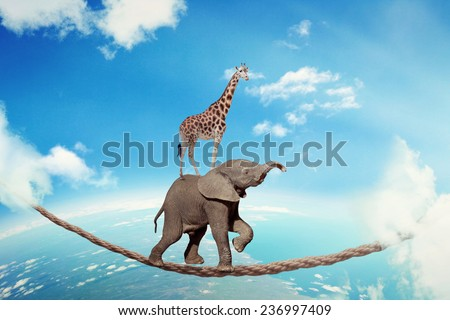 Managing risk business challenges uncertainty concept. Elephant with giraffe walking on dangerous rope high in sky symbol balance overcoming fear for goal success. Young entrepreneur corporate world  - stock photo