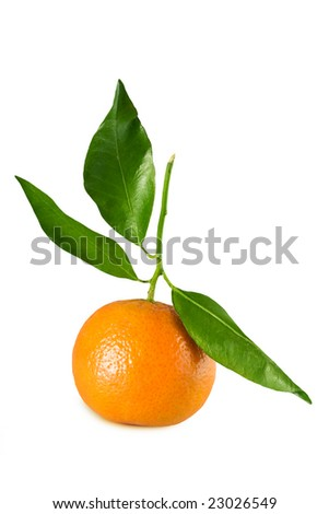 Mandarin branch with leafs isolated on white background - stock photo