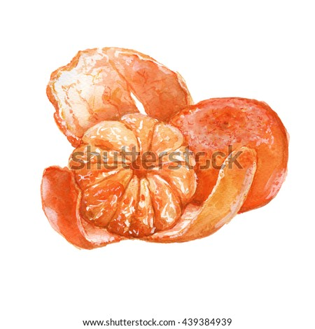 mandarin fruit. Peeled cloves. isolated. watercolor illustration
