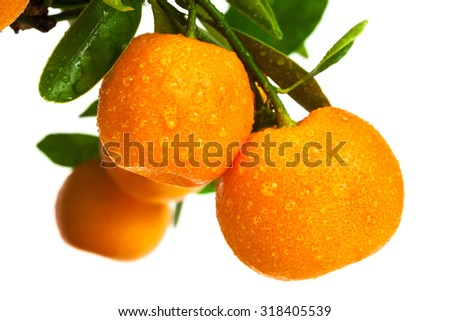 mandarins with drops of water on white background - stock photo