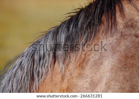 Mane of the horse who is grazed on a pasture. - stock photo