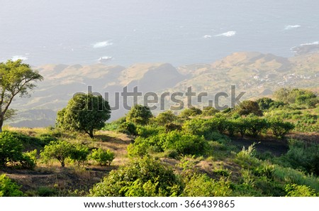 Mango, Cashew Guava and other fruit plants on the mountaintop orchard of Campana Riba in Fogo, Cabo Verde - stock photo