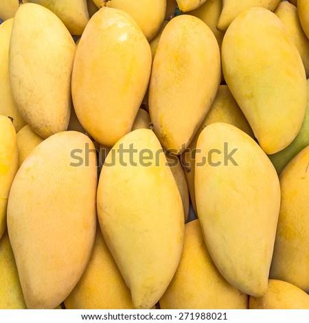Mango honey sweet yellow species of Thailand. - stock photo