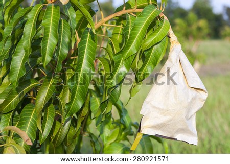Mango in wrapping paper carbon bag - stock photo