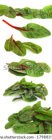 Mangold salad or Sweet beet leafs isolated on white background - stock photo