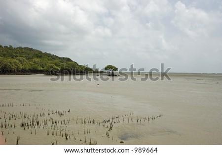 Mangrove at Cape Tribulation in Australia - stock photo