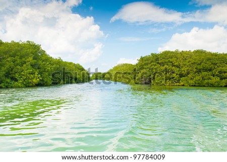 Mangrove, Caribbean sea, Dominican republic - stock photo