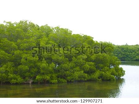 Mangrove covered island or peninsula near St Petersburg, Florida - stock photo
