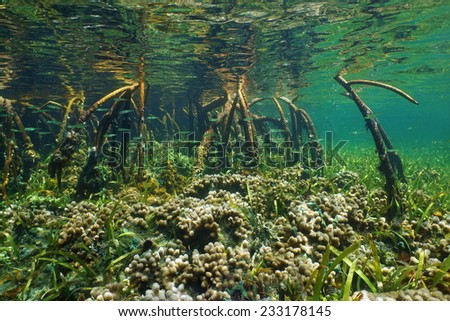 Mangrove ecosystem underwater with coral and juvenile fish in the roots - stock photo