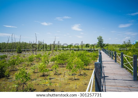 mangrove forest .A plant which grows in low tide and high tide. Coastal Areas Estuary or bay - stock photo