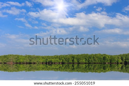 mangrove forest and blue sky - stock photo