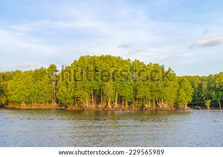 Mangrove forest and blue sky at chanthaburi thailand - stock photo