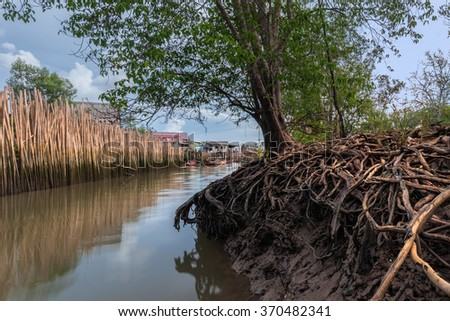 Mangrove forest and River - stock photo