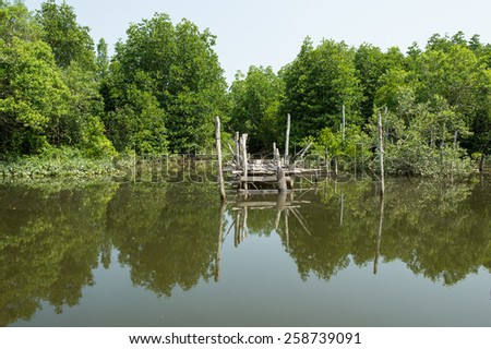 Mangrove forest and river to open sea - stock photo