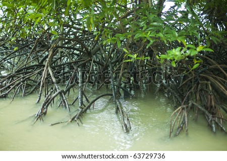 mangrove forest and roots in water - Thailand - stock photo