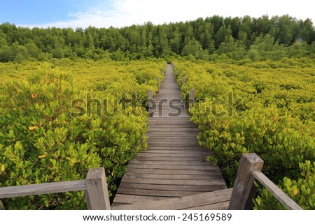 Mangrove forest and wood bridge - stock photo