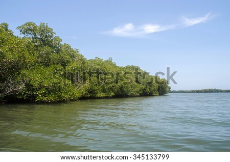 Mangrove Forest At Carenero, Venezuela. South America. - stock photo