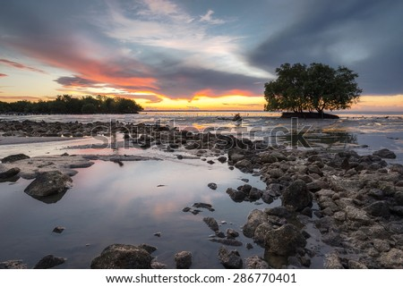 Mangrove forest Coastal waters in Thailand - stock photo