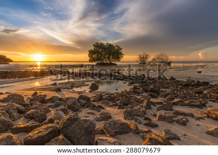 Mangrove forest during sunrise. Beautiful natural seascape - stock photo