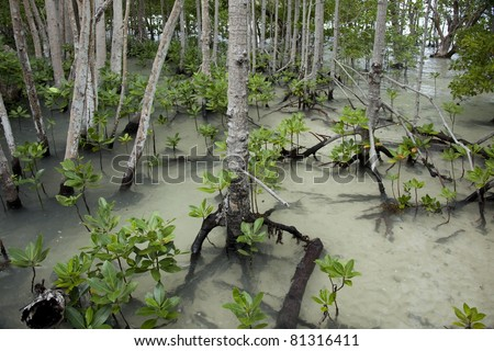 Mangrove forest in Seychelles Curieuse island - stock photo