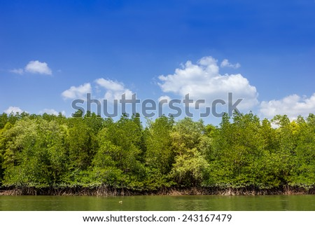 mangrove forest in southern thailand and blue sky - stock photo