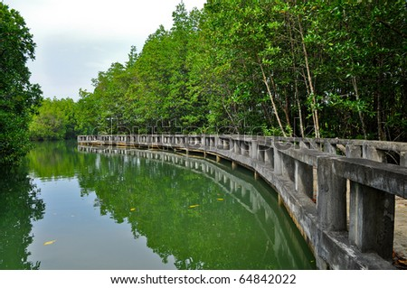 Mangrove forest in the water angle