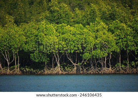 Mangrove forest in tropical sea in Andaman sea, southern of Thailand - stock photo