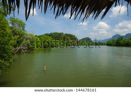 Mangrove forest topical for background design Thailand - stock photo