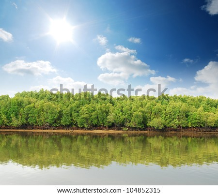 Mangrove forest topical rainforest for background design Thailand - stock photo